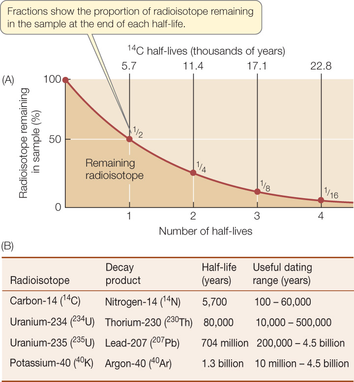 radioisotopes used in carbon dating