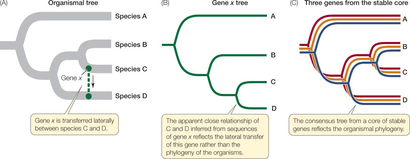 gene transfer in prokaryotes