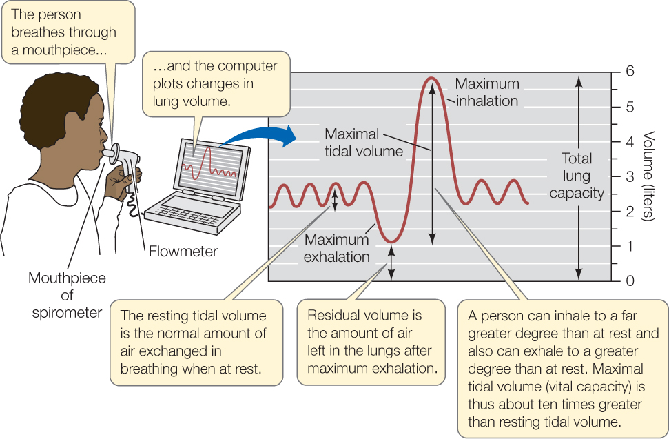 Pulmonary Surfactant Function and Ventilation - Study.com