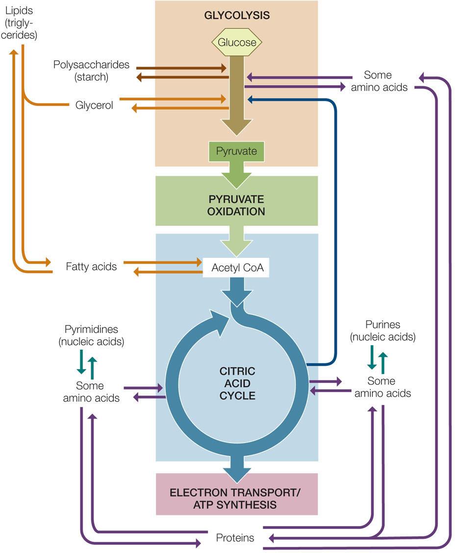 Txu Energy Forms