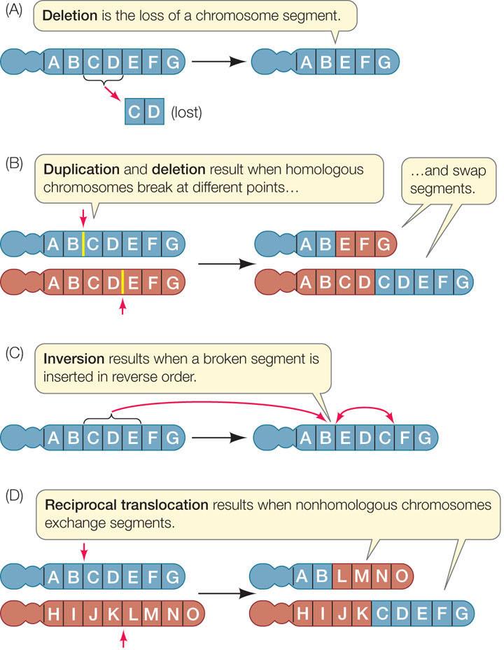 Kromosomistomutaatio